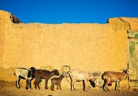 Atar, Mauritania